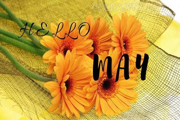 tháng 5 cung gì