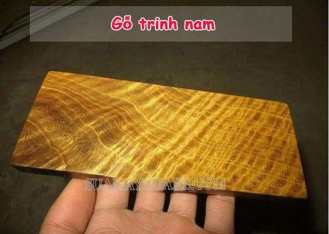 Gỗ trinh nam là gỗ gì ? Tại sao gỗ Trinh Nam lại quý hiếm đến vậy