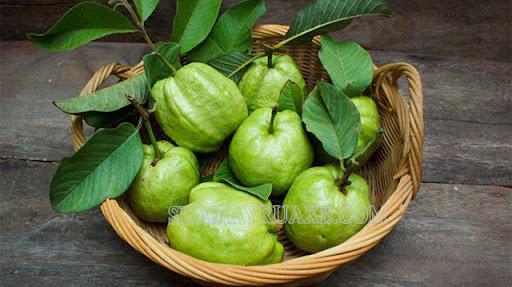 Mùa thu có quả gì? Top 7 loại hoa quả đặc trưng của mùa thu